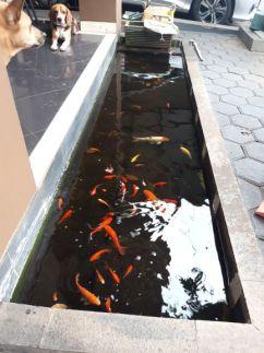 kolam ikan persegi besar