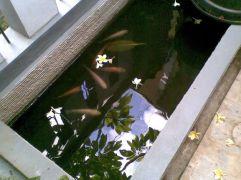kolam satu lagi